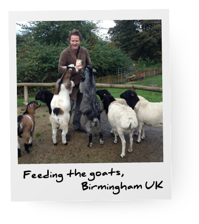 thomas-hall-goats.png