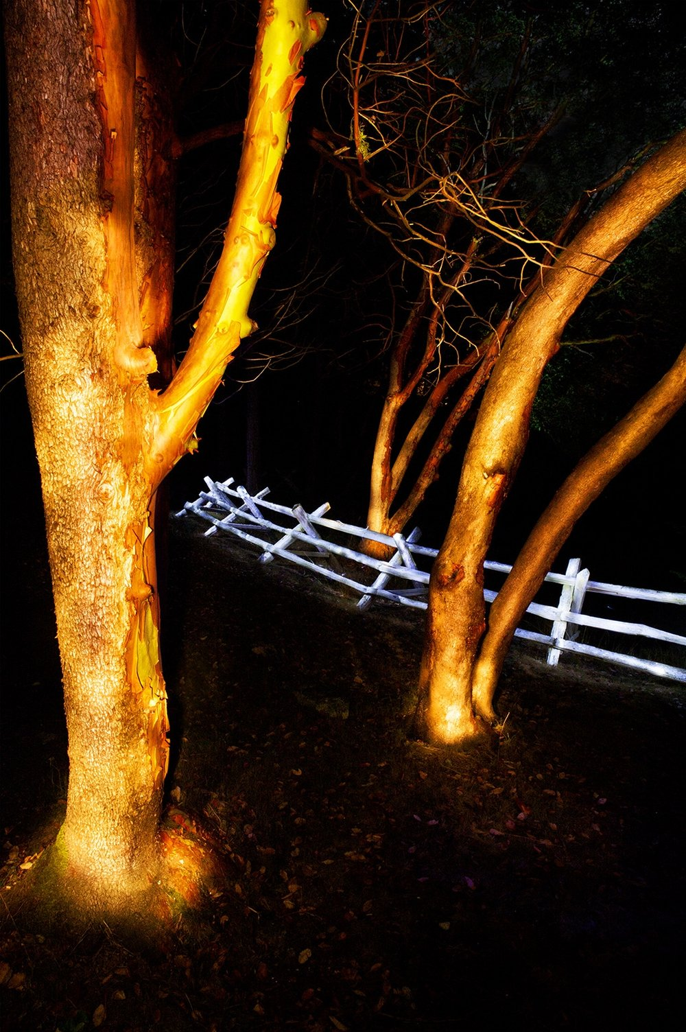 Glowing Madronas and Fence TAG.jpg