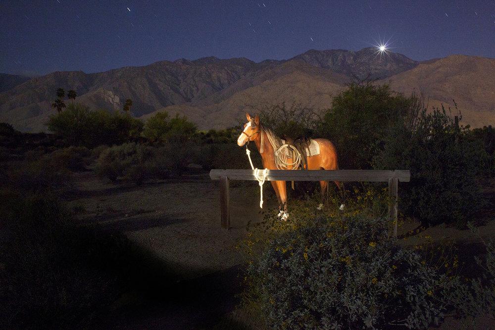 Plastic HorseFinal TAG .jpg