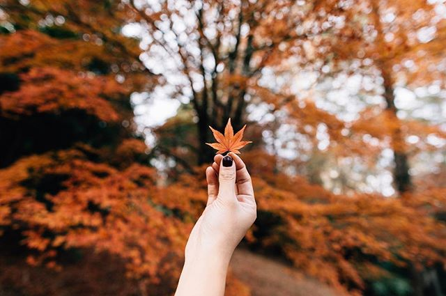 So ready for this beautiful season. What's your favourite thing about fall?? 👇🏻