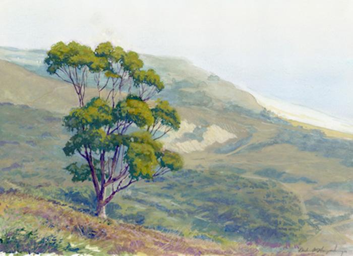 lone eucalyptus.jpg