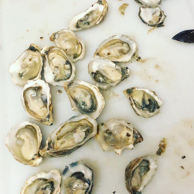 Very artisanal batch of Kumamotos #japaneseoyster #saltlife #daddysback