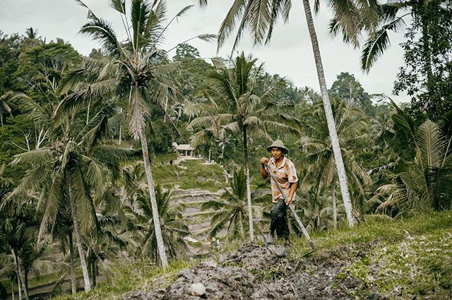 Bring me back to Bali on rainy days like this.  This Balinese farmer was amazing. He worked tirelessly on this patch at the rice fields for hours.  Such hard workers and so content, an attitude to be appreciated that's for sure. 🍃🌞✨ #bali