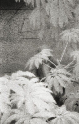 """LINES AND CURVES: """"LADY BEHIND PLANTS"""""""