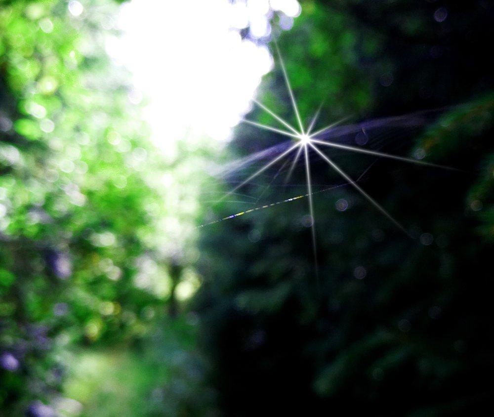 Ett spindelnät fångat i solens gnistrande strålar