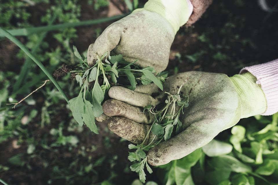 gardening-2518377_960_720.jpg