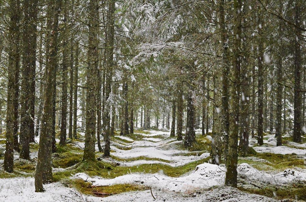Finn Ro eller dans i Skogen.  Foto: Vara med Naturen
