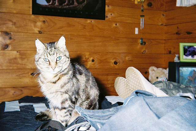 The coolest cat in the world    Bless his dearly departed soul, but this up until 6 months ago, was:    Mister   Muggle   Muggle-Breath   The-Breath-Monster   Mister-Muggle   Fungal   Fungus   Fungal-Mungal    I know this photo is overexposed, but I had a big ass flash atop the  Baldamatic (centre) , and I don't really care.  He's been asleep on one of my favourite t-shirts and I love his 'just woken up' face.   Also, there's something about the wood that makes this photo look timeless, I reckon this could've been 1973.