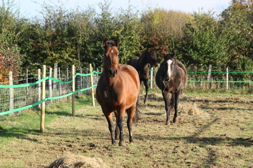 Paddock paradise, horse track system