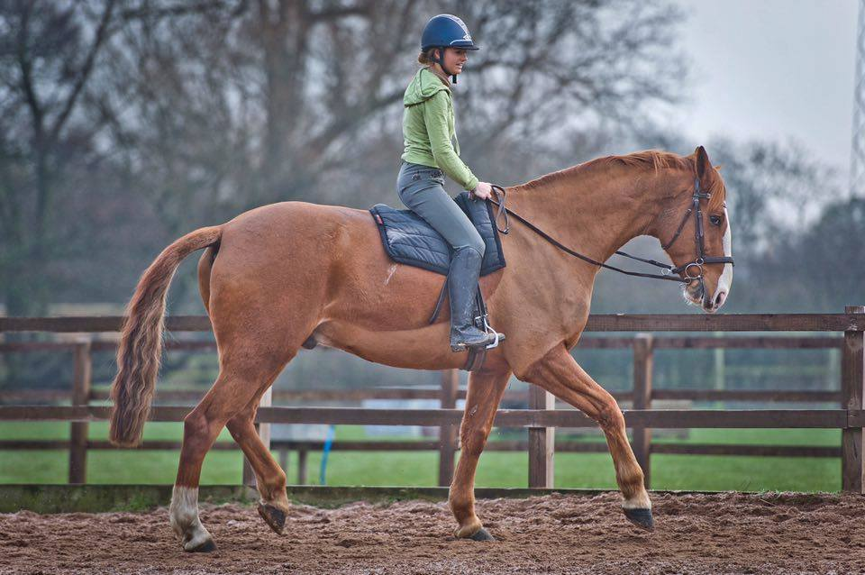 Schooling in a Total Contact Saddle
