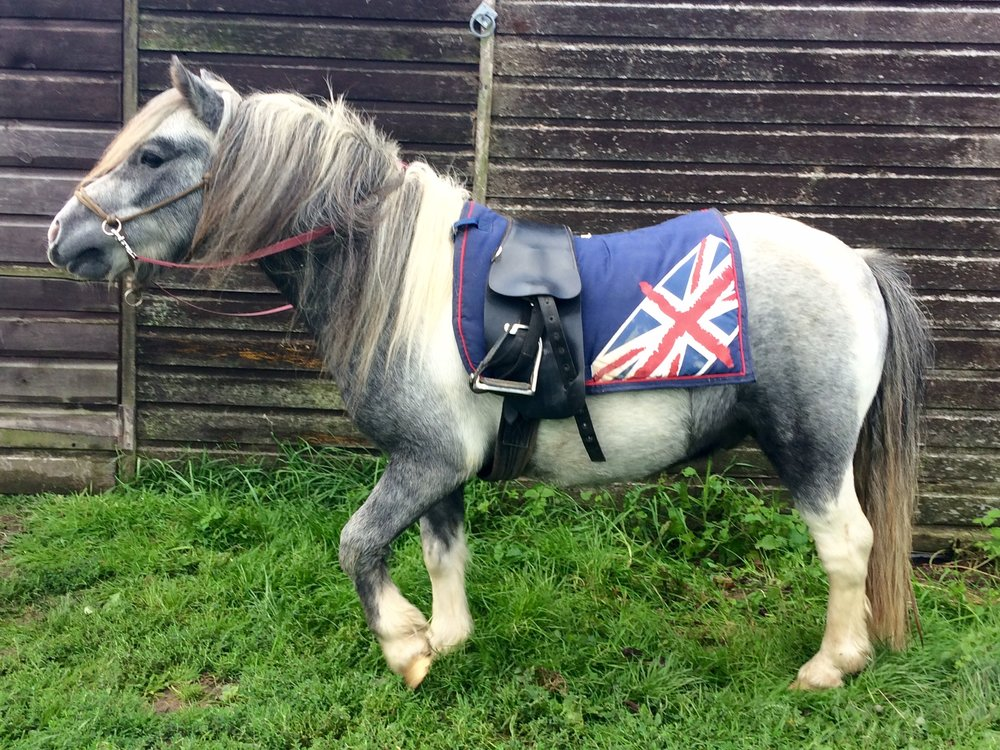 Hamish Shetland wearing Total Contact Saddle