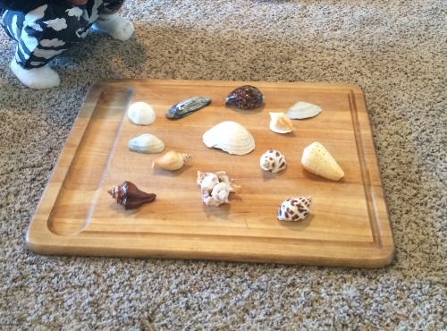 Children love beautiful things. You should have seen the face of N- when she saw the shells displayed in the board