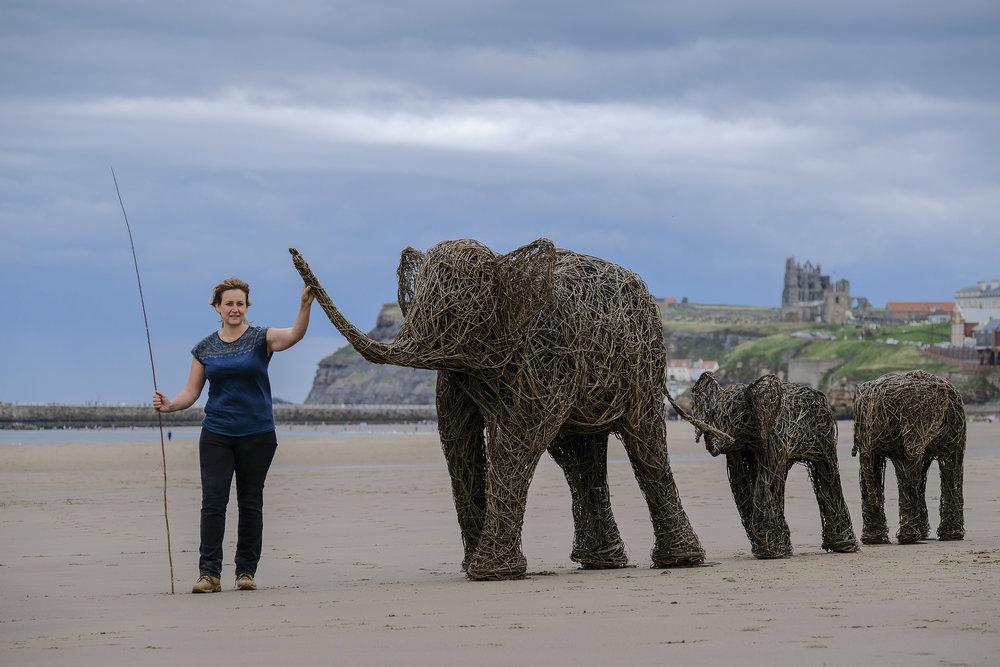 TBP PR beach elephants-2.jpg