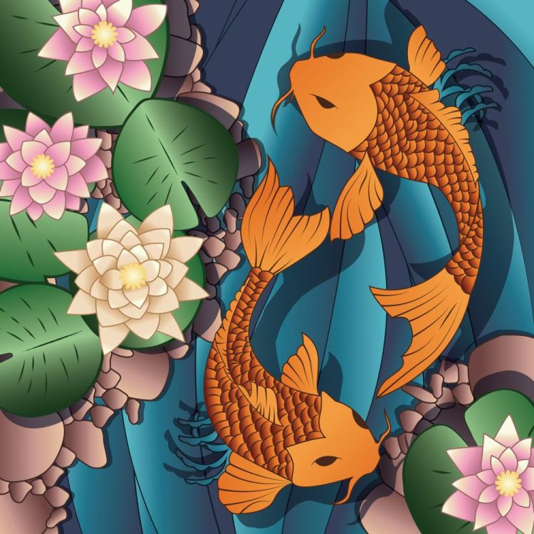 Carp Koi fish swimming in a pond with water lilie
