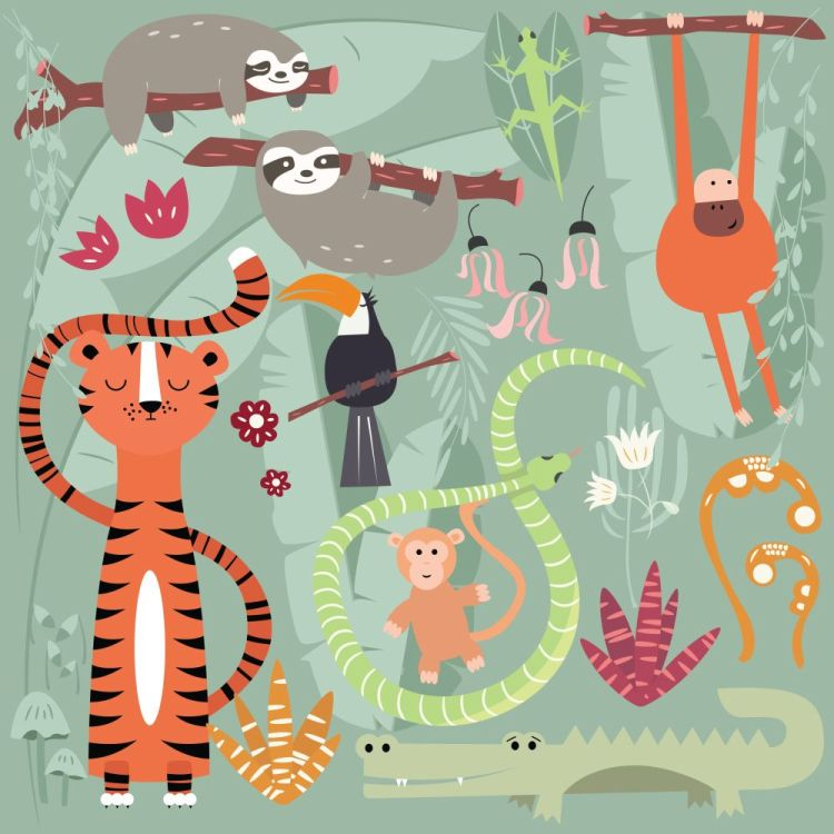 Collection of cute rain forest animals, tiger, snake, sloth, mon