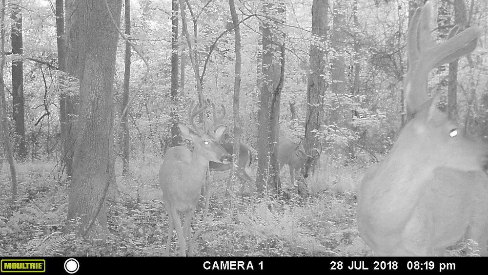 deer pic 3 - Copy.JPG