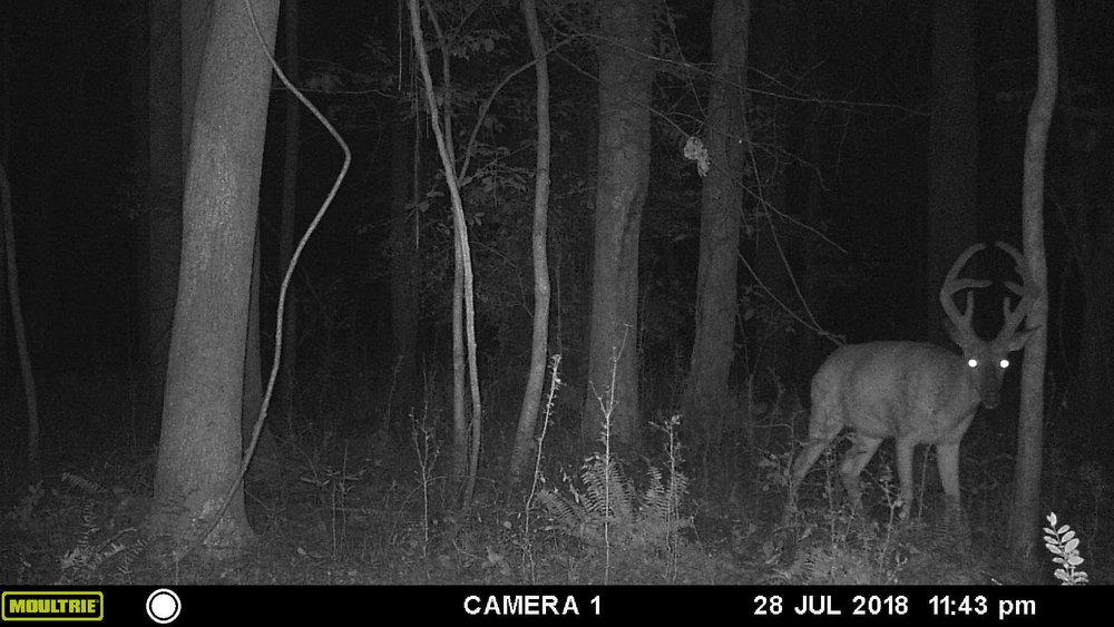 deer pic 5.JPG