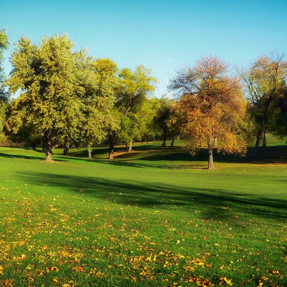 trees-grass-lawn-park-pexel.jpg