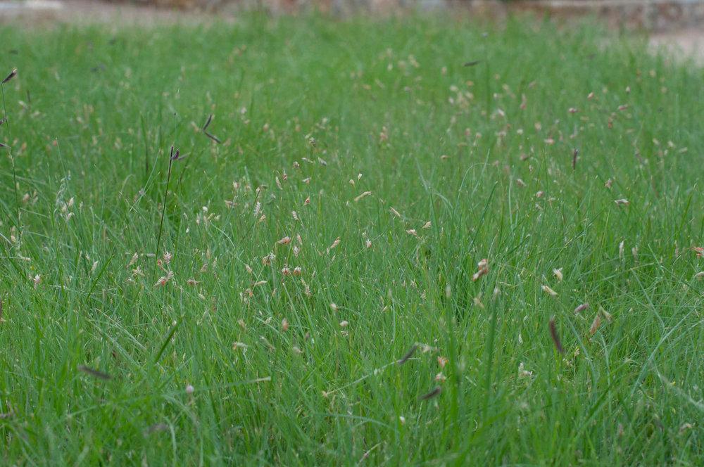 Flowering Habiturf