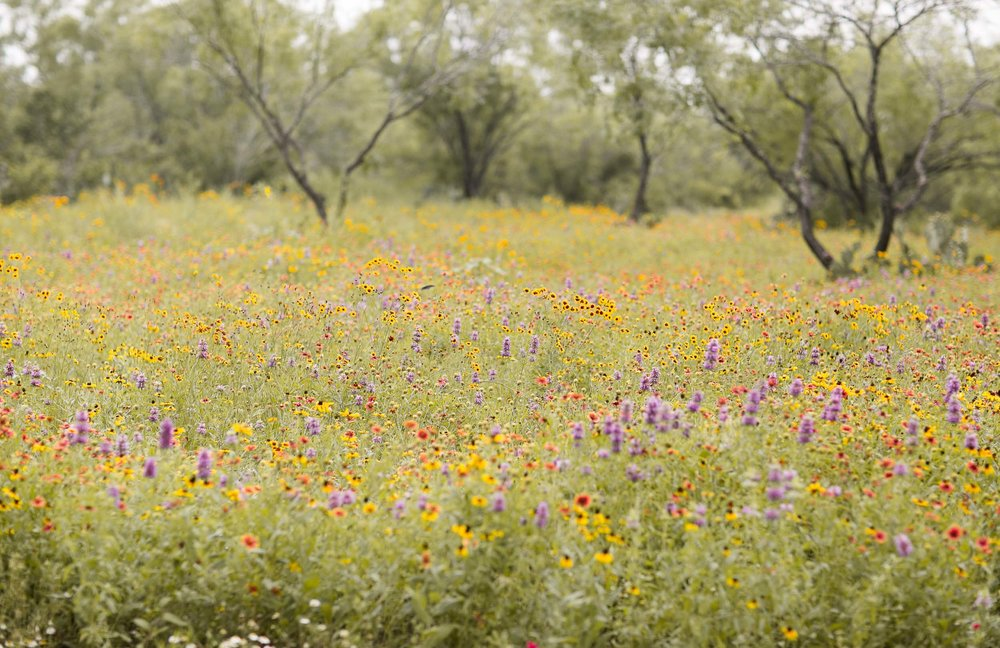 King's Wildflower Mix