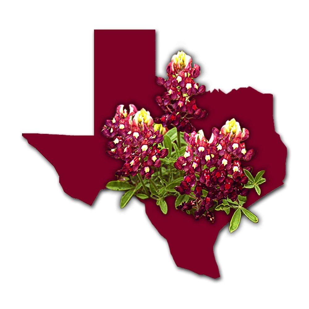 'Texas Maroon' Bluebonnets