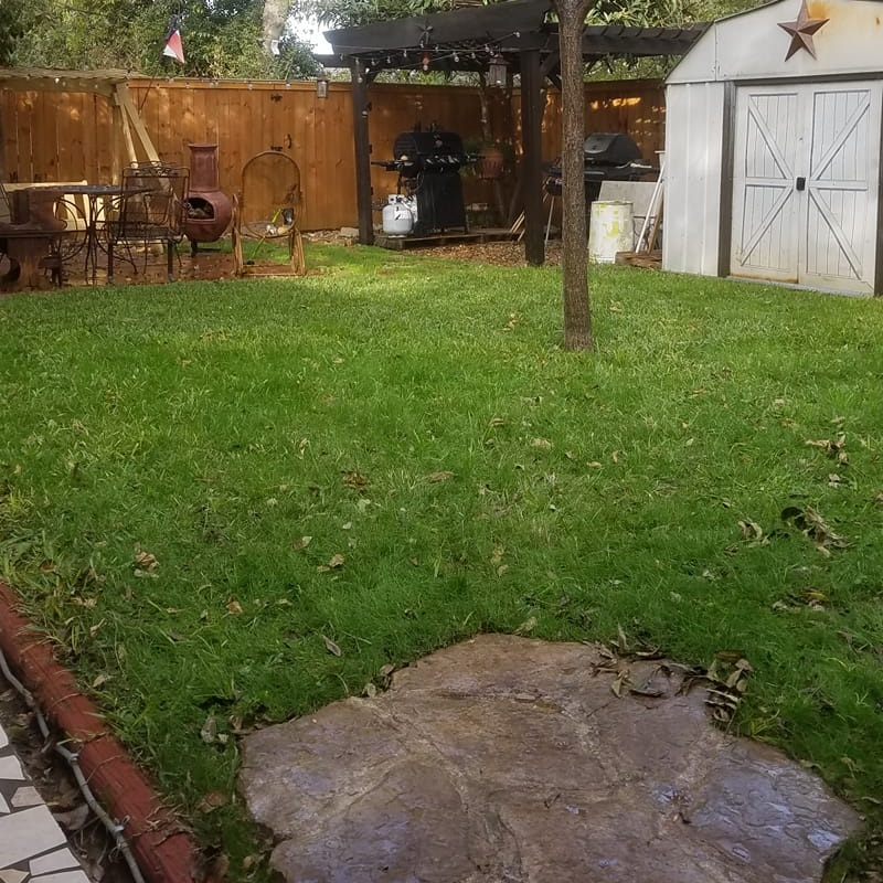Diamond Perennial Rye in a Central Texas Lawn in December. The perennial rye doesn't grow very fast, so less mowing is needed.