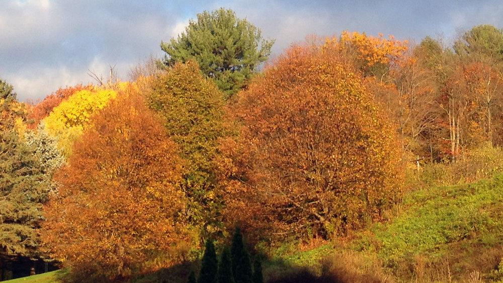 foliage-slider.jpg