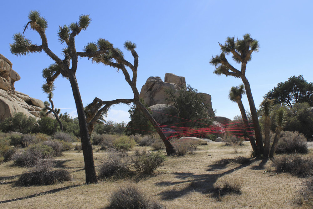 Kalifornien, USA, Joshua Tree National Park, 2015