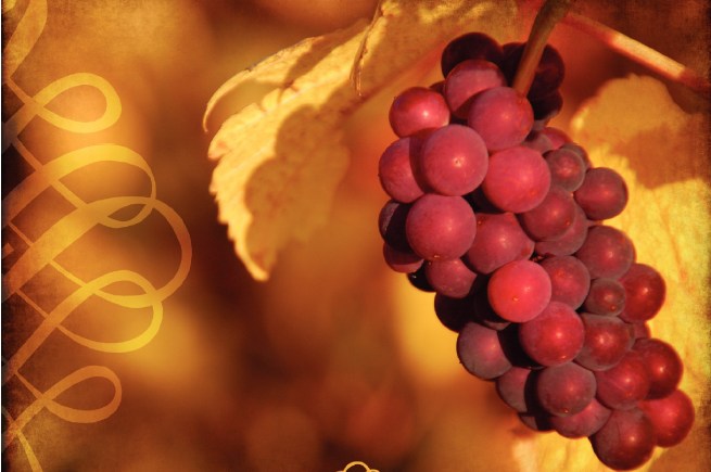 I AM the true vine - Fruit will be our subject as we learn in John 15 to abide in the True Vine, Jesus Christ.