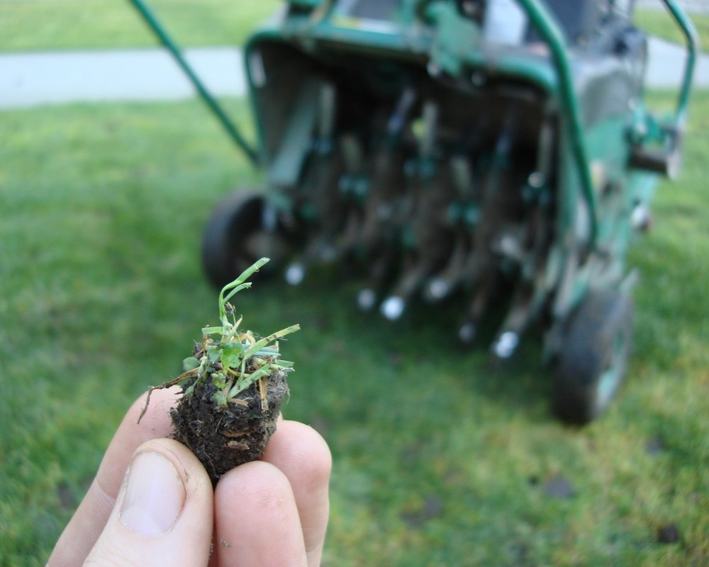 Aeration removes plugs of turf and soil, allowing better penetration of air, water and nutrients into the soil.