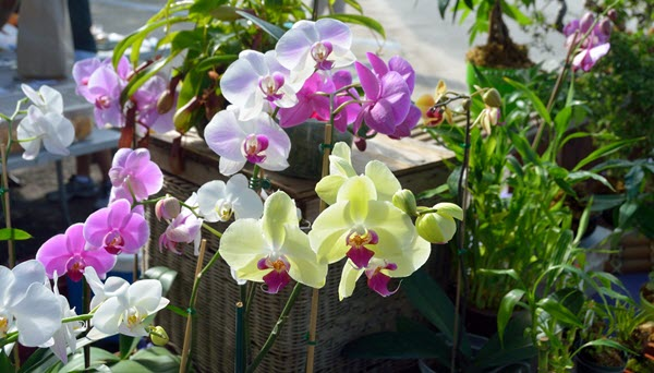 where to buy orchids.jpg