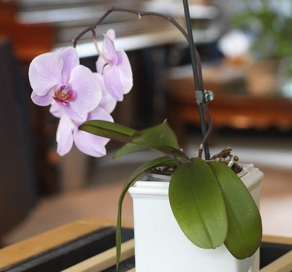 See how the plastic potted orchid is in a ceramic decorative pot. Photo Source: Brico Bistro