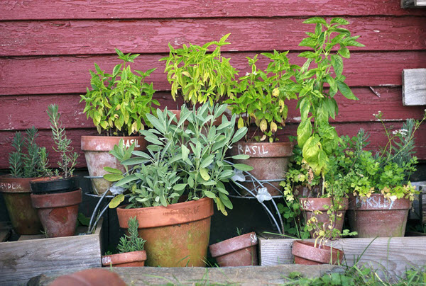 container gardening autumn.jpg