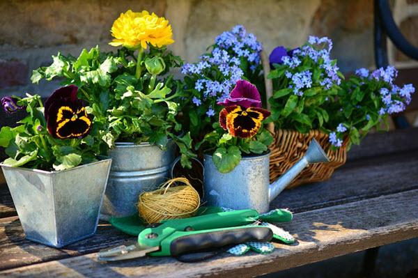 container gardening spring.jpg