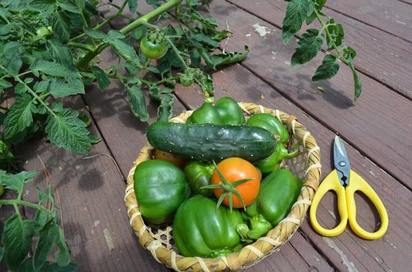 container gardening summer.jpg