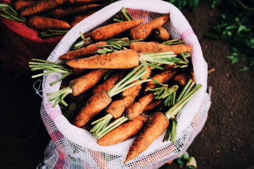 Bag of fresh carrots with stems