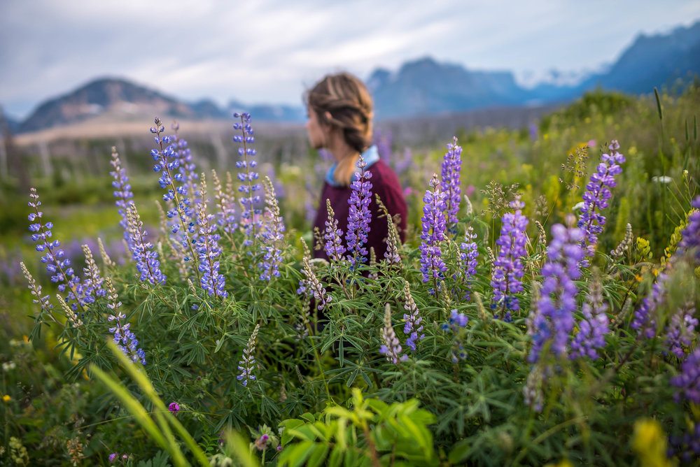 wild flowers in Glacier National Park
