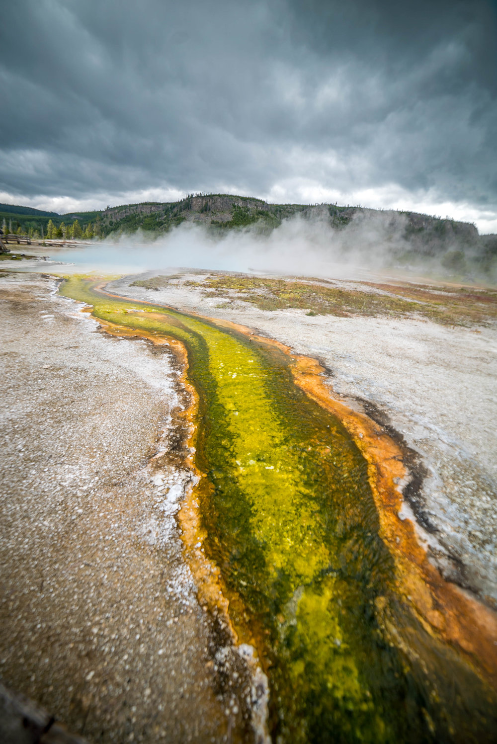 colorful thermophiles (heat loving microorganisms) in Geyser Basin