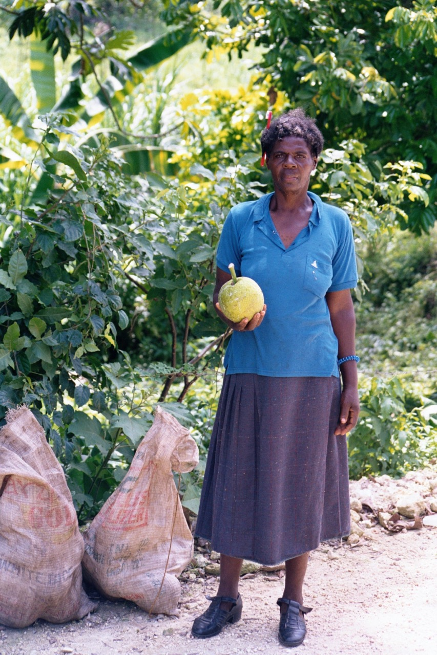 This lady was gathering breadfruit by the side of the road.