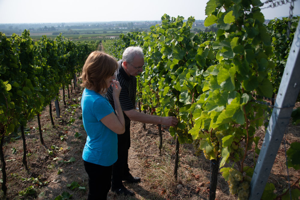 Melissa tasting grapes off the vine with Rainer