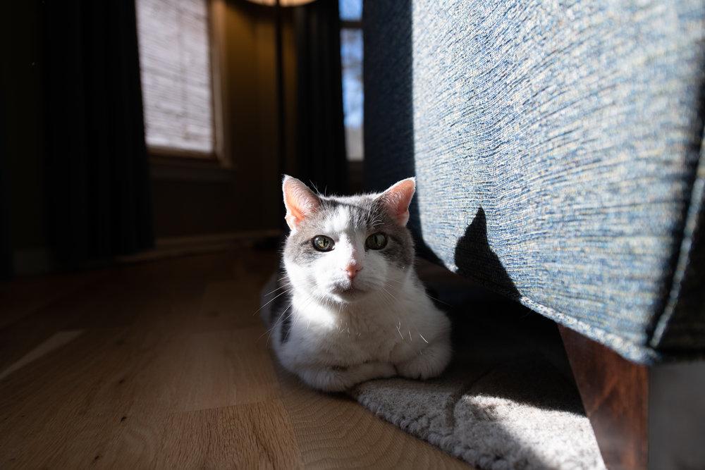 Buster Douglas enjoying the sun.