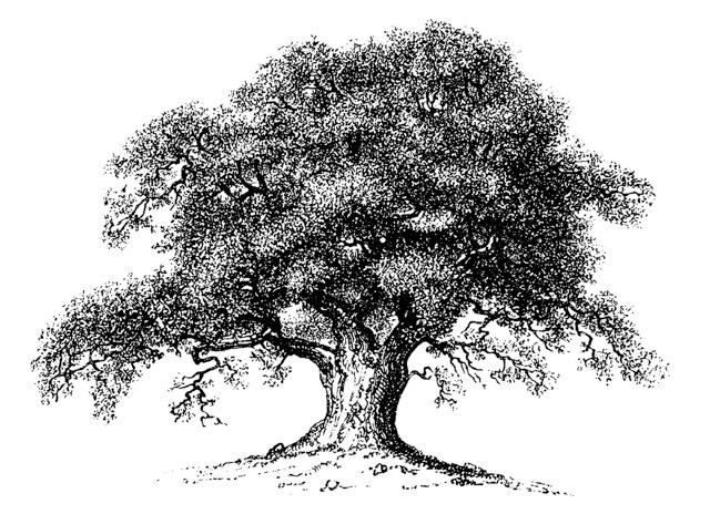 Oak Tree logo4 in.jpeg