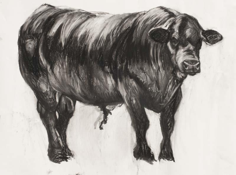 draw-08-freddie-the-bull.jpg