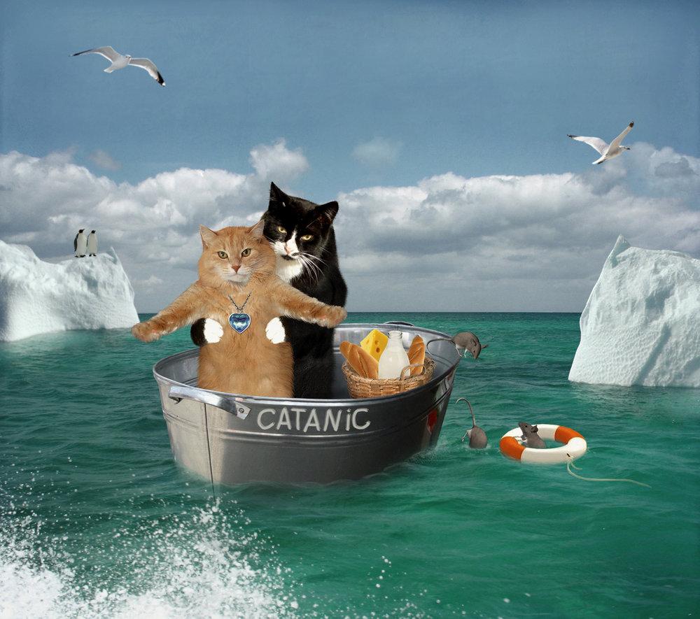 Deux chats. Meme Titanic.