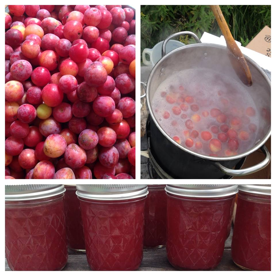 making wild plum jam.jpg