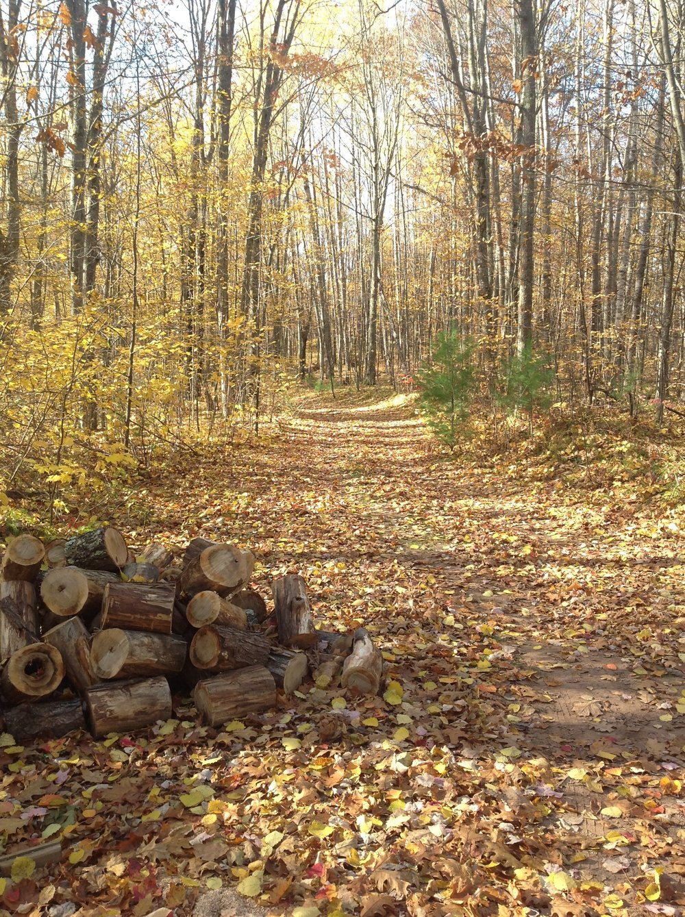 Fall trail and wood pile