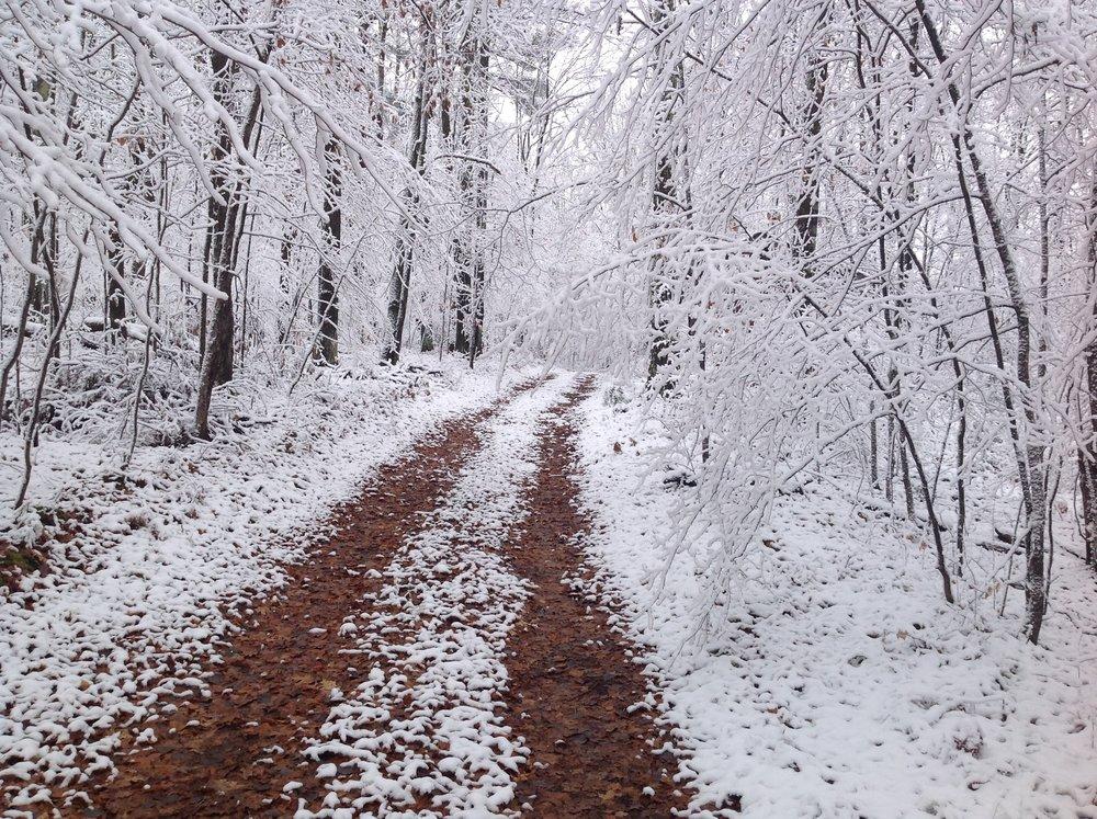 Wintery Woods.JPG