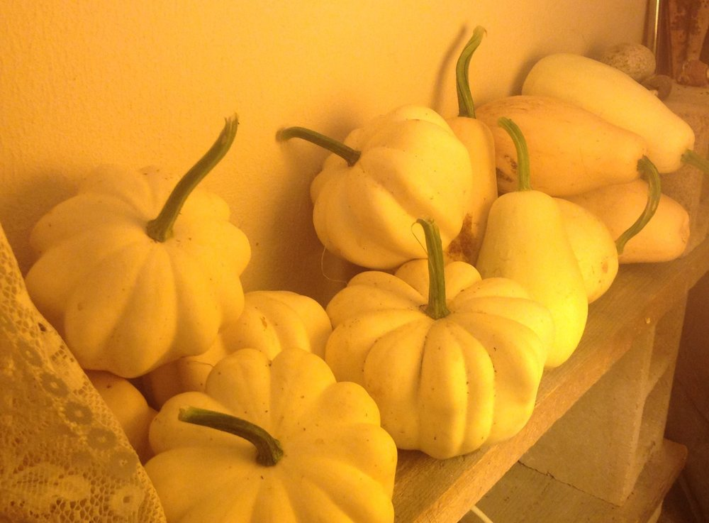 Squash in a Healthy Pantry