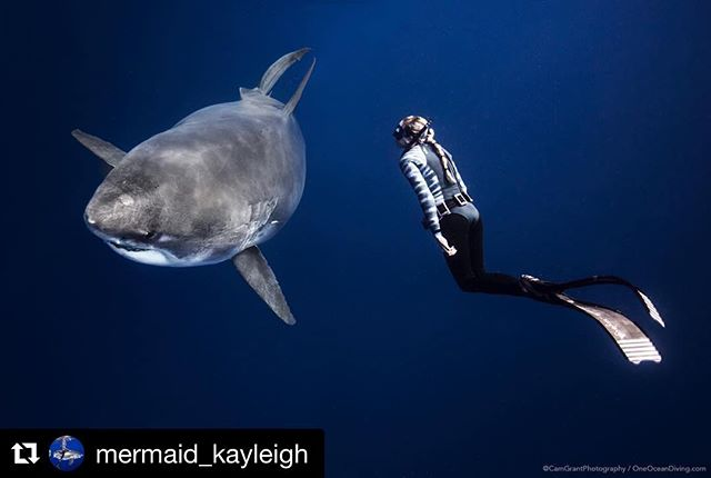 """#Repost @mermaid_kayleigh HELP SAVE SHARKS!!! Submit testimony by tomorrow night! ・・・ Senate Bill 489 (SB489) now has a companion bill in the House! 🙌🏼 This means if one bill dies we'll still have ANOTHER shot at banning the purposeful fishing of sharks in rays in Hawaii this legislative season! House Bill 808 (HB808) also just got its first hearing. You can submit the same testimony you sent in for SB489 by sending an email to WLHTestimony@capitol.hawaii.gov (slightly different e-mail than last time) with the subject line: """"In SUPPORT of HB 808"""" Tell this committee why you think sharks should be protected.🦈 You can even write something as short and sweet as """"I support HB 808"""" or """"please protect sharks and rays!"""" 📸 Photo by @camgrantphotography using @nauticamhousings x @oneoceandiving x @keiko_conservation 💙"""