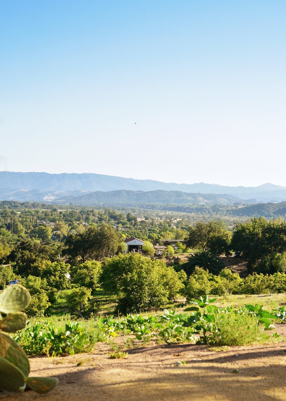 Ojai Vista Farm